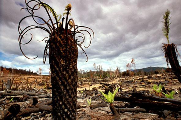 Rainforest-w'dchips